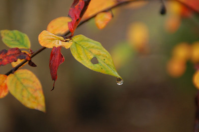 Høstblader (© Ragnar Våga Pedersen)