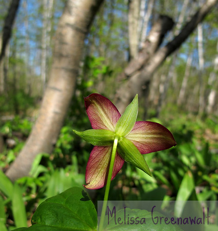 Trillium would rather not speak to you right now.  Plymouth, NH.