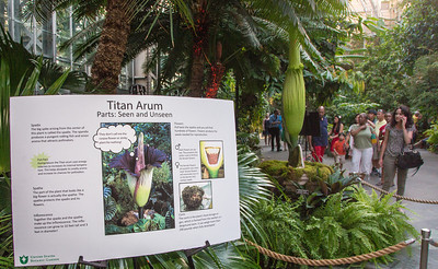 Educational materials explain the story of the titan arum.