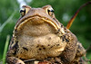 """Portrait of """"Toad""""<br /> Hunt Valley, MD"""