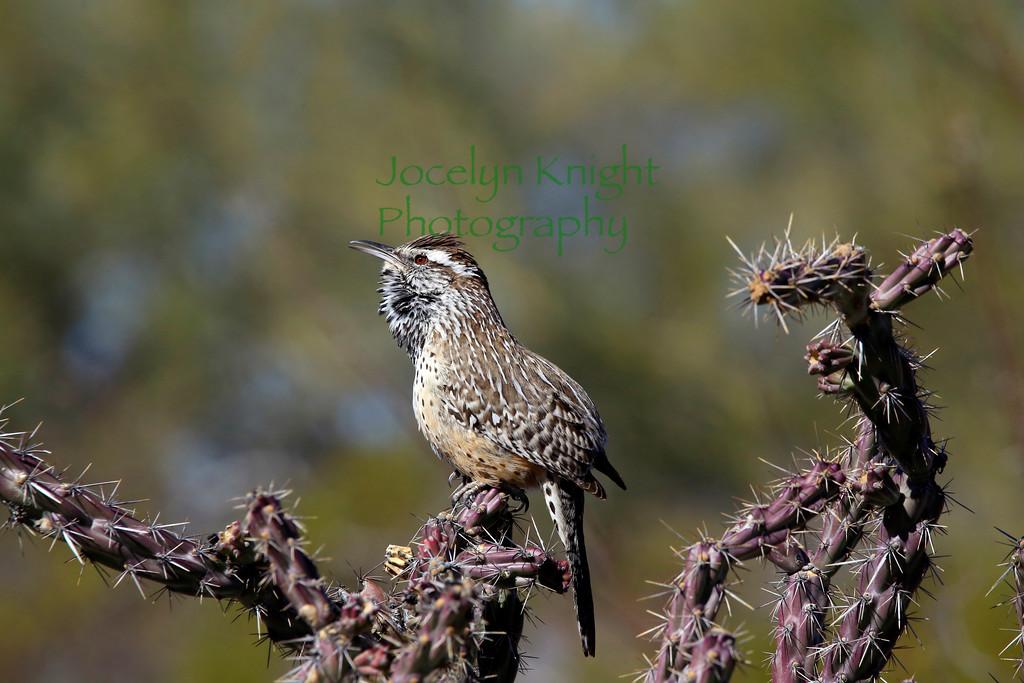 CactusWren5231