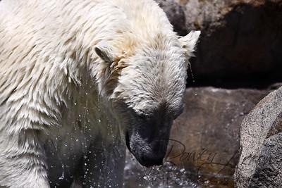 Toledo Zoo 051709-24