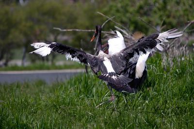 Toledo Zoo 051709-56