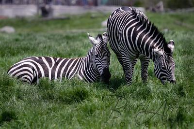 Toledo Zoo 051709-68