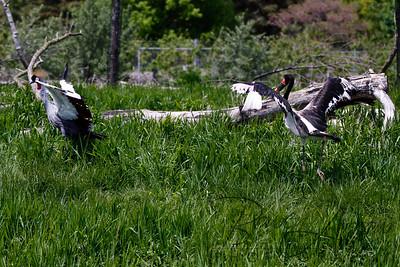 Toledo Zoo 051709-54
