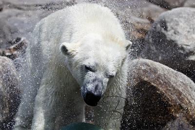 Toledo Zoo 051709-30