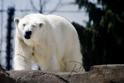 Toledo Zoo 051709-13
