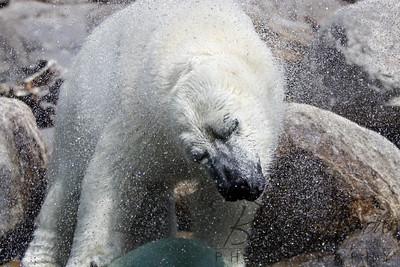 Toledo Zoo 051709-28