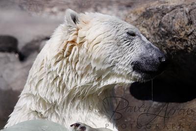 Toledo Zoo 051709-23