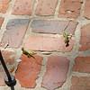 Top Ridge Green Lizards at 309RR 03-13-12