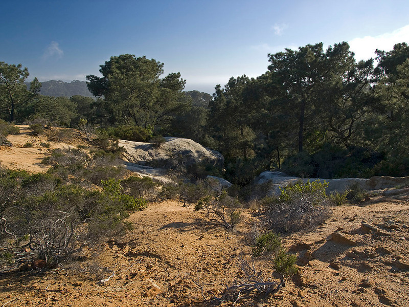 """I think the story behind these nature photos is just as important as the images. It's important to put the images into context. There is a much larger story to the Torrey Pines Park.<br /> No thought exists without an image. Socrates<br />  <a href=""""http://www.torreypine.org"""">http://www.torreypine.org</a><br />  <a href=""""http://www.parks.ca.gov/?page_id=657"""">http://www.parks.ca.gov/?page_id=657</a>"""