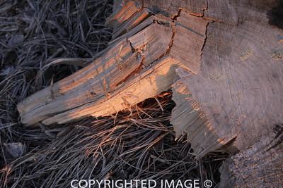 Mourning Wood5 - Torreys at Twilight