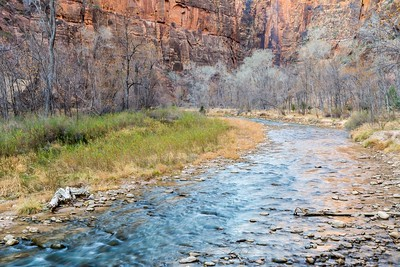 Not much foliage left during the winter, Zion NP.