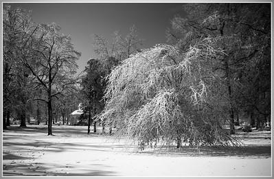 Tower Grove Park December 2 2006