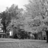 Tower Grove Park 103011-1