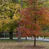 Tower Grove Park 103011-3