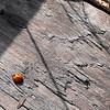 Ladybug,.Ladybug,,,fly away home..