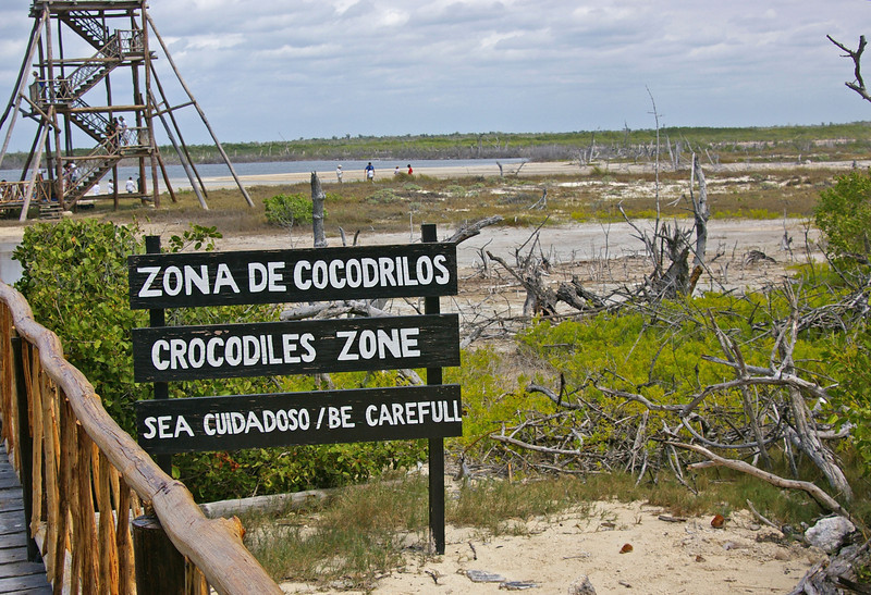 At the southern end of Cozumel there is the large Faro Celarain Eco Park.  There are turtles, birds, great beaches, and crocodiles.