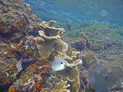 Cozumel, Underwater