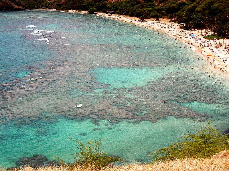 Hanauma Bay.  Great diving spot.