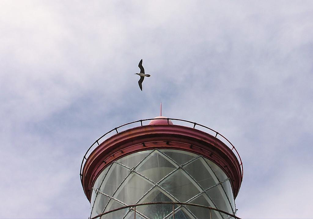 Albatross over Lighthouse
