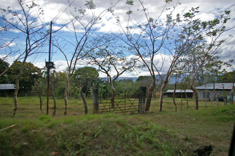 "The farming areas have a lot of ""living fences""<br /> When green poles are put in the ground for fences they take root and grow.  They usually have old barbed wire strung between them."