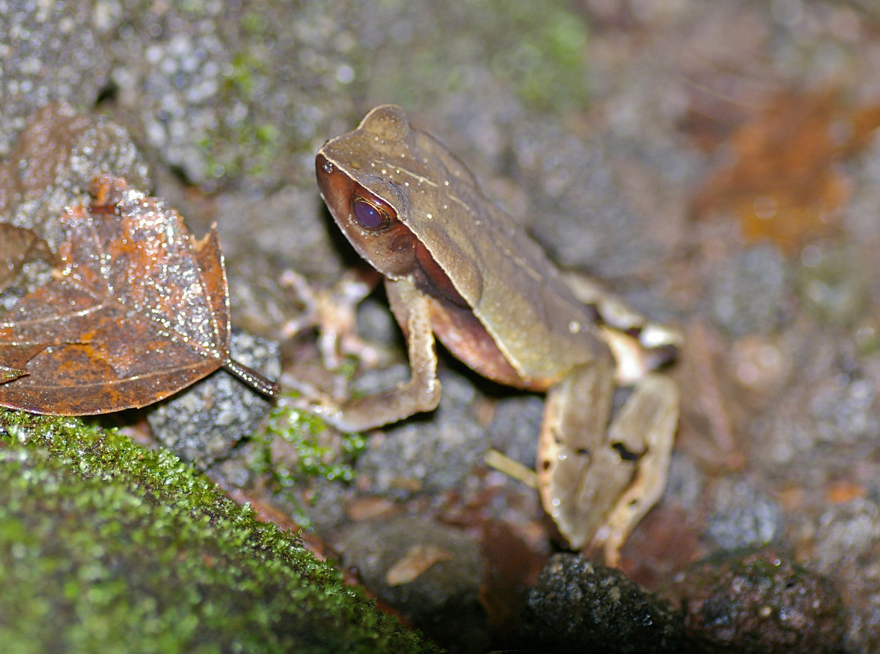 Litter Frog