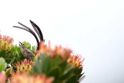 Kirstenbosch Botanical Gardens - South Africa