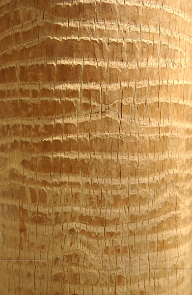 Palm Tree Texture (from palm in World Trade Center,  NYC)