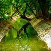Artistic photographs