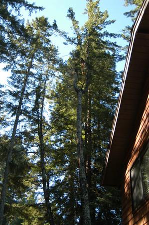 Tree logging behind house 7-7-06
