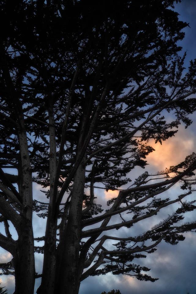 California Monterey