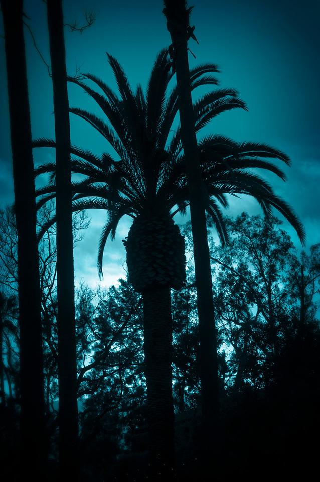 Sunset Blue Palm