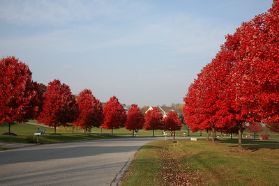 Fall Color at Cattail