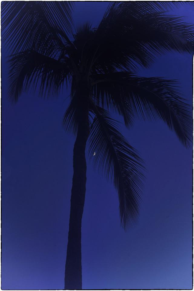 Midnight Palm