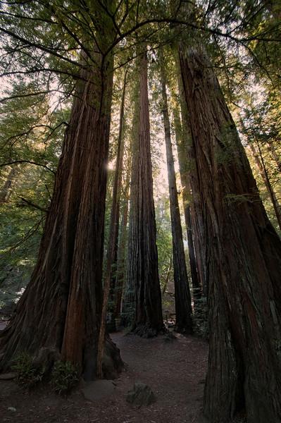 Armstrong Redwood National Park