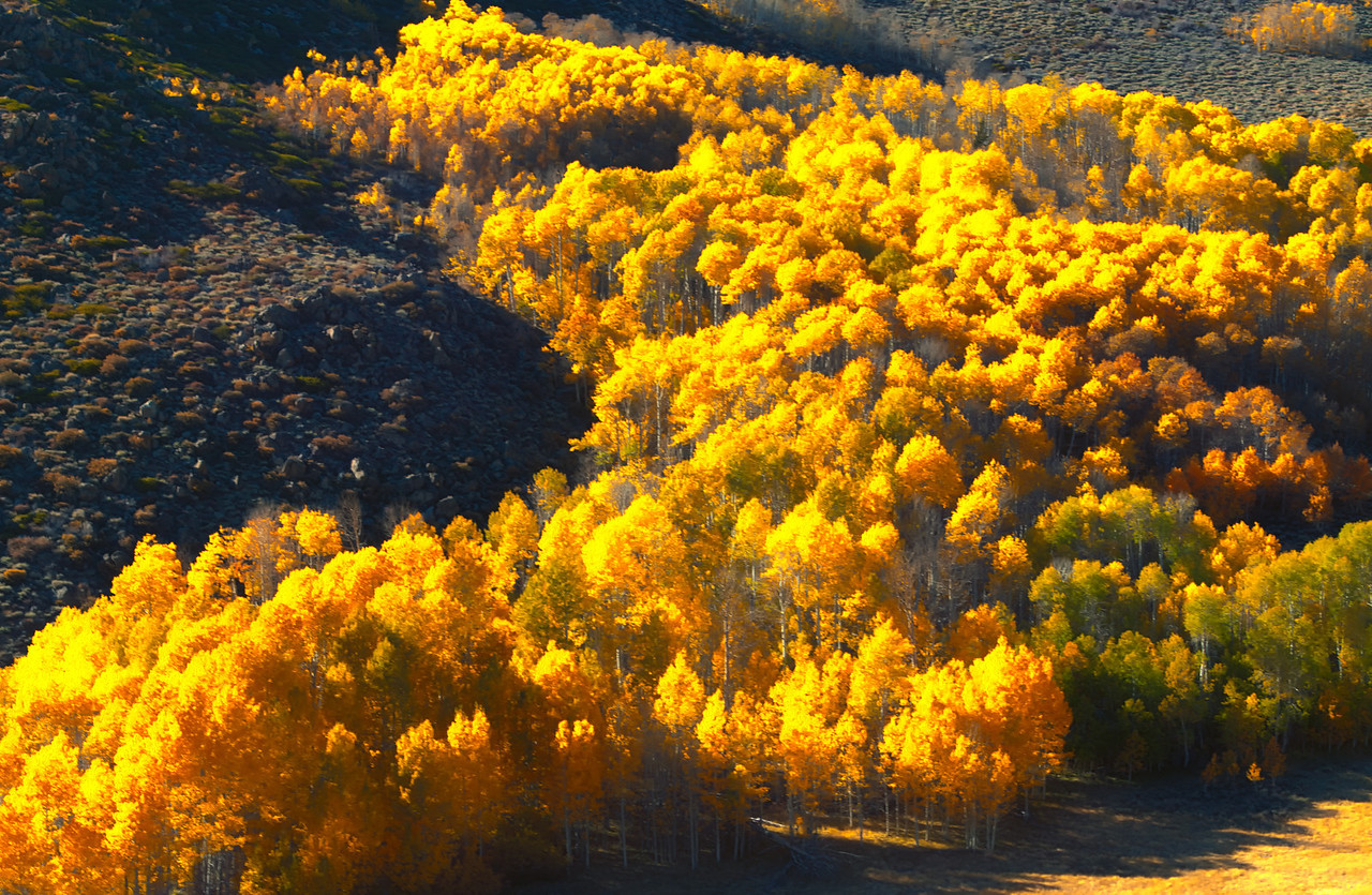 Eastern Sierra Fall Burst3