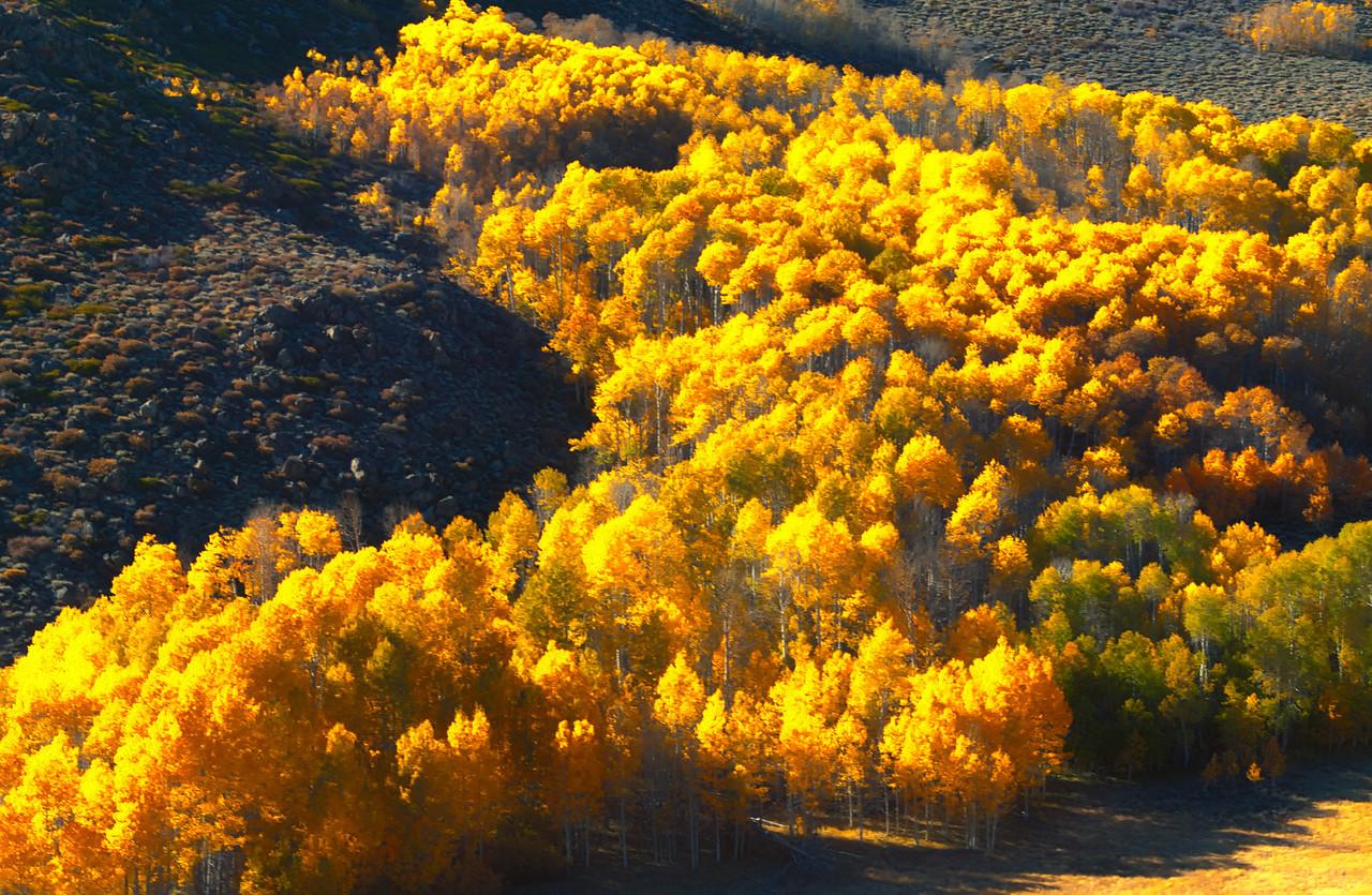 Eastern Sierra Fall Burst3