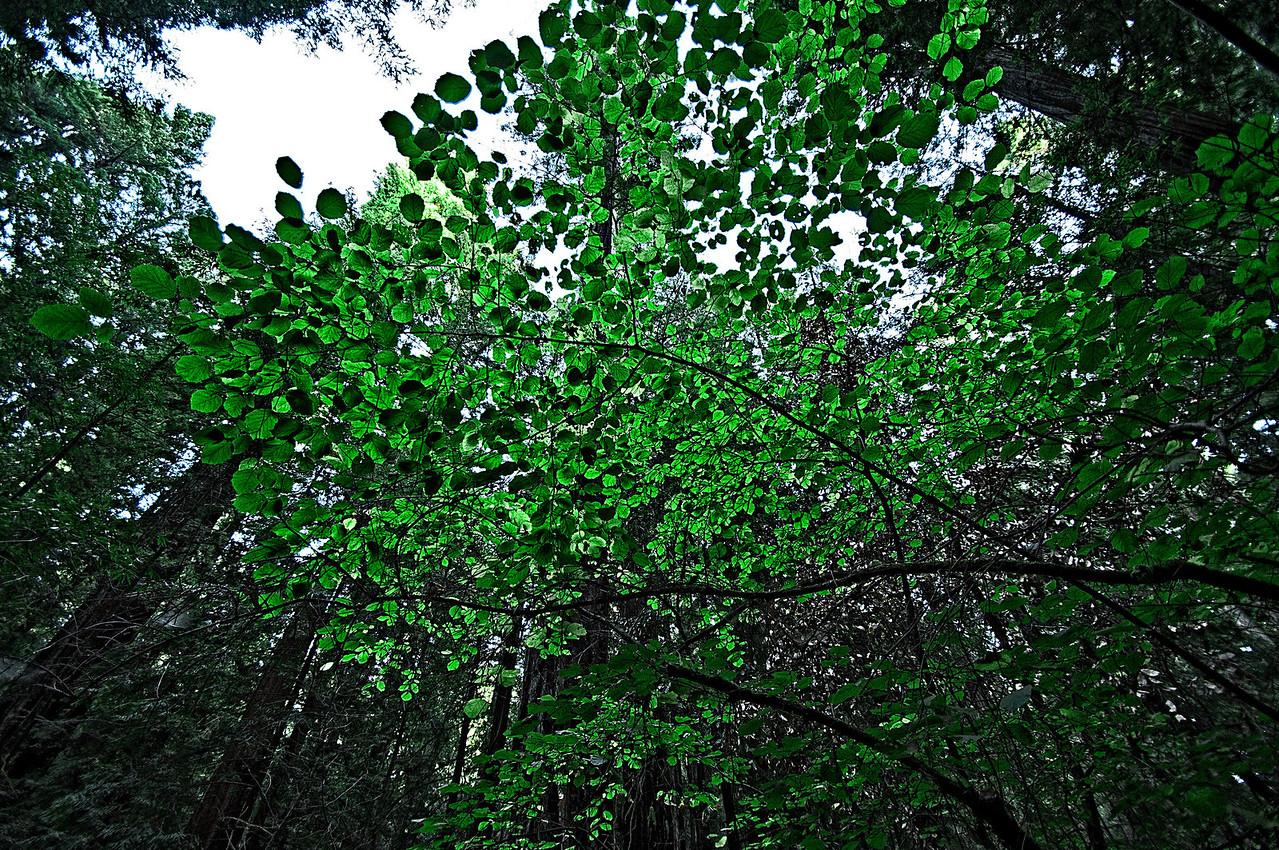 Dogwood Sunlight