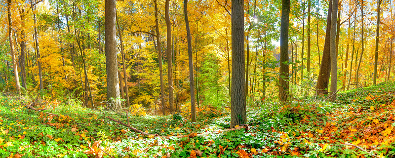 Arlington Forest in Autumn