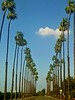 There are long stretches of palms throughout south Riverside