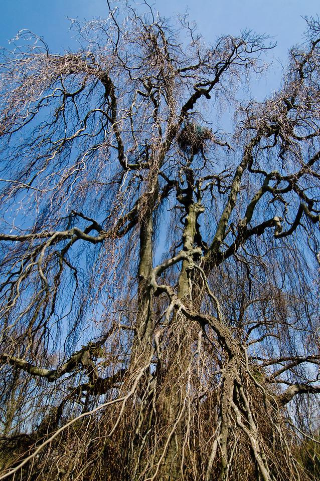 Spring tree, Bayard-Cutting Arboretum