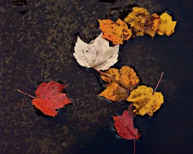 Fall Leaves, Nova Scotia