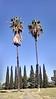 Cemetery Palms in Santa Fe Springs