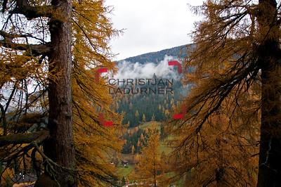 larch tree - Urlärche / Ultental - Südtirol