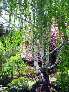 Denver Botanic Gardens 0508 (15)