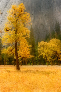 Fall, Yosemite Valley