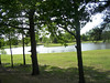 Lake & Trees 3