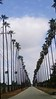 Did I mention - There are long stretches of palms throughout south Riverside?