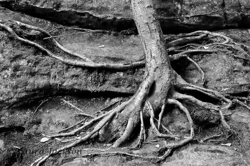Tree Hugger in Black and White